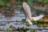 Un oiseau dans le Parc national de Tràm Chim dans la province de Dông Thap (delta du Mékong).<br /> Photo : VNA/CVN