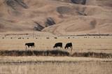 Face à la sécheresse, les autorités californiennes ont brusquement coupé le robinet au monde agricole. Photo : AFP/VNA/CVN