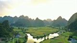La saison du riz mûr à Trung Khanh, Cao Bang (Nord). Photo : VNA/CVN